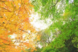 ハートに見える紅葉たち