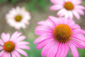 この花よく見るけど名前が分からん!