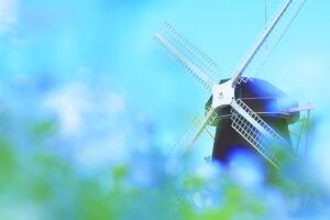 ネモフィラと風車